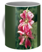 Kashmir Tree Mallow  Coffee Mug