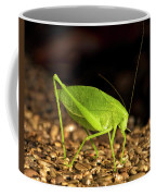 Katydid Close Up Bug Coffee Mug
