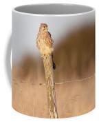 Kestrel In Evening Light Coffee Mug