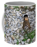 Kildeer And Eggs Coffee Mug