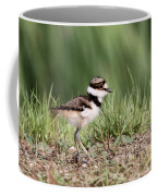 Killdeer - 24 Hours Old Coffee Mug
