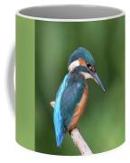 Kingfisher Watching Below Coffee Mug