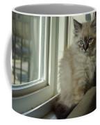 Kitten Daydreams Coffee Mug