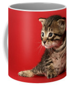 Kitten On Red Coffee Mug