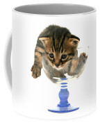 Kitten Sits In A Glass  Coffee Mug