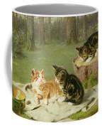 Kittens Playing Coffee Mug