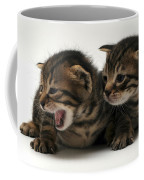 Kittens  Coffee Mug