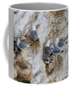 Kittiwakes Tend Their Chicks At Rspb Bempton Cliffs Coffee Mug