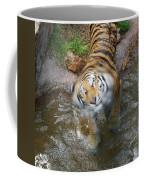 Kitty Got Wet Coffee Mug