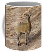 Klipspringer Coffee Mug