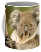 Koala Snack Coffee Mug