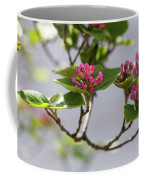 Korean Spice Viburnum Coffee Mug