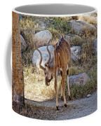 Kudu Near A Waterhole In Living Desert Zoo And Gardens In Palm Desert-california  Coffee Mug