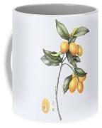Kumquat Coffee Mug by Margaret Ann Eden