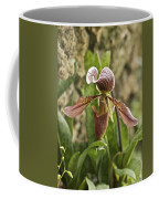 Lady Slipper 2 Coffee Mug