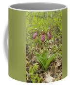 Lady Slipper 2059 Coffee Mug