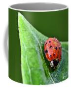 Ladybug With Dew Drops Coffee Mug