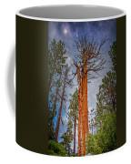 Lake Tahoe Trees On 89  Coffee Mug