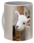 Lamb Coffee Mug by Michelle Calkins
