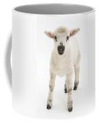 Lamb Standing Coffee Mug