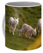 Lambs On The Meadow Coffee Mug