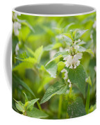 Lamium Album White Flowers Macro Coffee Mug