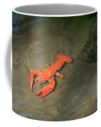 Large Crawdad Coffee Mug