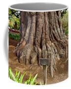 Large Cypress Tree Trunk In Carmel Mission-california  Coffee Mug