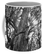 Large Tree Coffee Mug