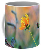 Late Summer Rain From The Forest Floor Coffee Mug