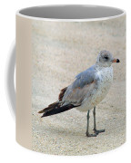 Laughing Gull Coffee Mug