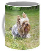 Laughing Yorkshire Terrier Coffee Mug