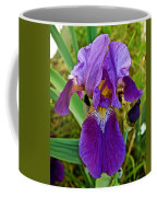 Lavender Iris At Pilgrim Place In Claremont-california  Coffee Mug