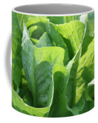 Leaf Lettuce Coffee Mug