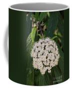 Leatherleaf Viburnum Coffee Mug