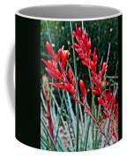 Lechuguilla Agave At Pilgrim Place In Claremont-california  Coffee Mug