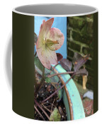 Lenten Rose After An April Shower Coffee Mug