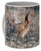 Lesser Prairie Chicken Displaying Coffee Mug