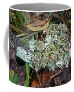 Lichen On Dead Branch Outer Banks North Carolina Usa Coffee Mug