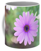 Light Purple Gazania Macro 1  Coffee Mug