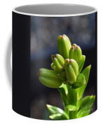 Lily Growth  Coffee Mug