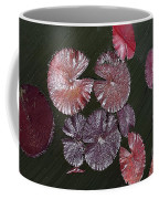 Lily Pads In The Pond Coffee Mug