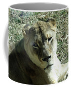 Lioness Peering Coffee Mug