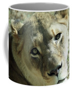 Lioness Up Close Coffee Mug