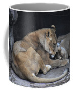 Lioness's Playing 2 Coffee Mug
