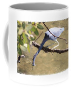Little Blue Heron Going For Fish With Framing Coffee Mug