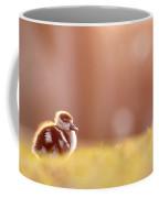 Little Furry Animal - Gosling In Warm Light Coffee Mug
