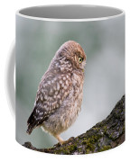 Little Owl Chick Practising Hunting Skills Coffee Mug