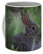 Little Rabbit Coffee Mug by Beth Sargent