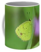 Little Yellow Butterfly Close-up Coffee Mug